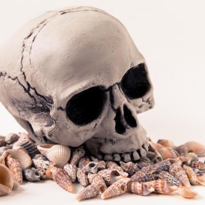 Memento mori aux coquillages